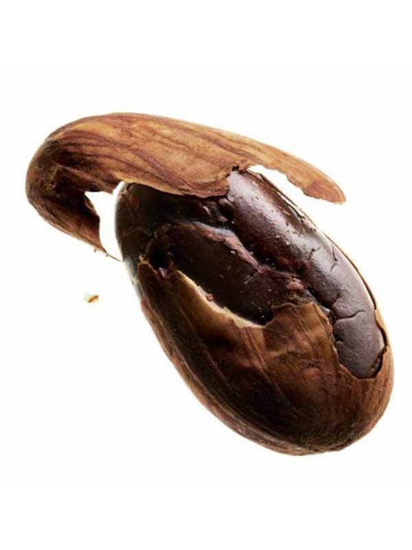 fèves de cacao torréfiées agriculture biologique pure origine Equateur